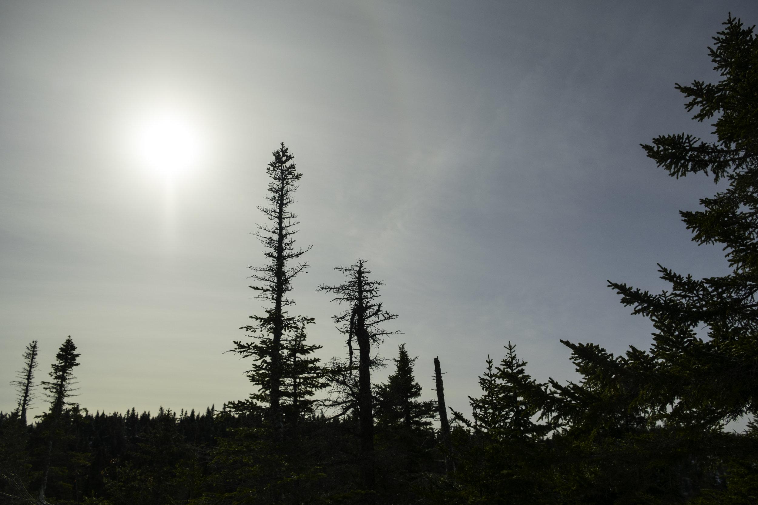 Another chancesun risesclimb, climb, climbawaken -