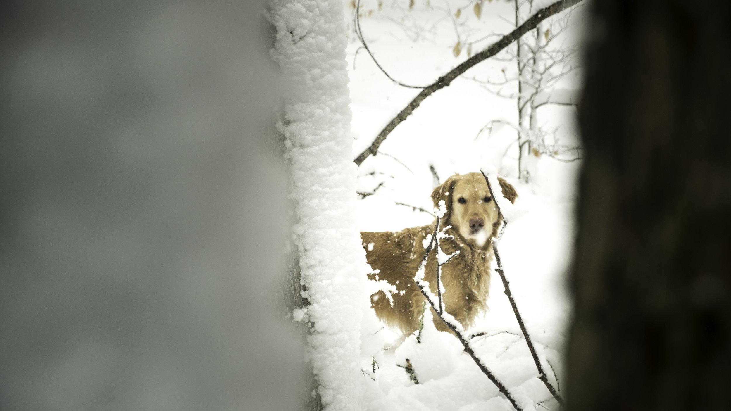 20180308_untitled_SnowStormBackyard_DSCF4378.jpg