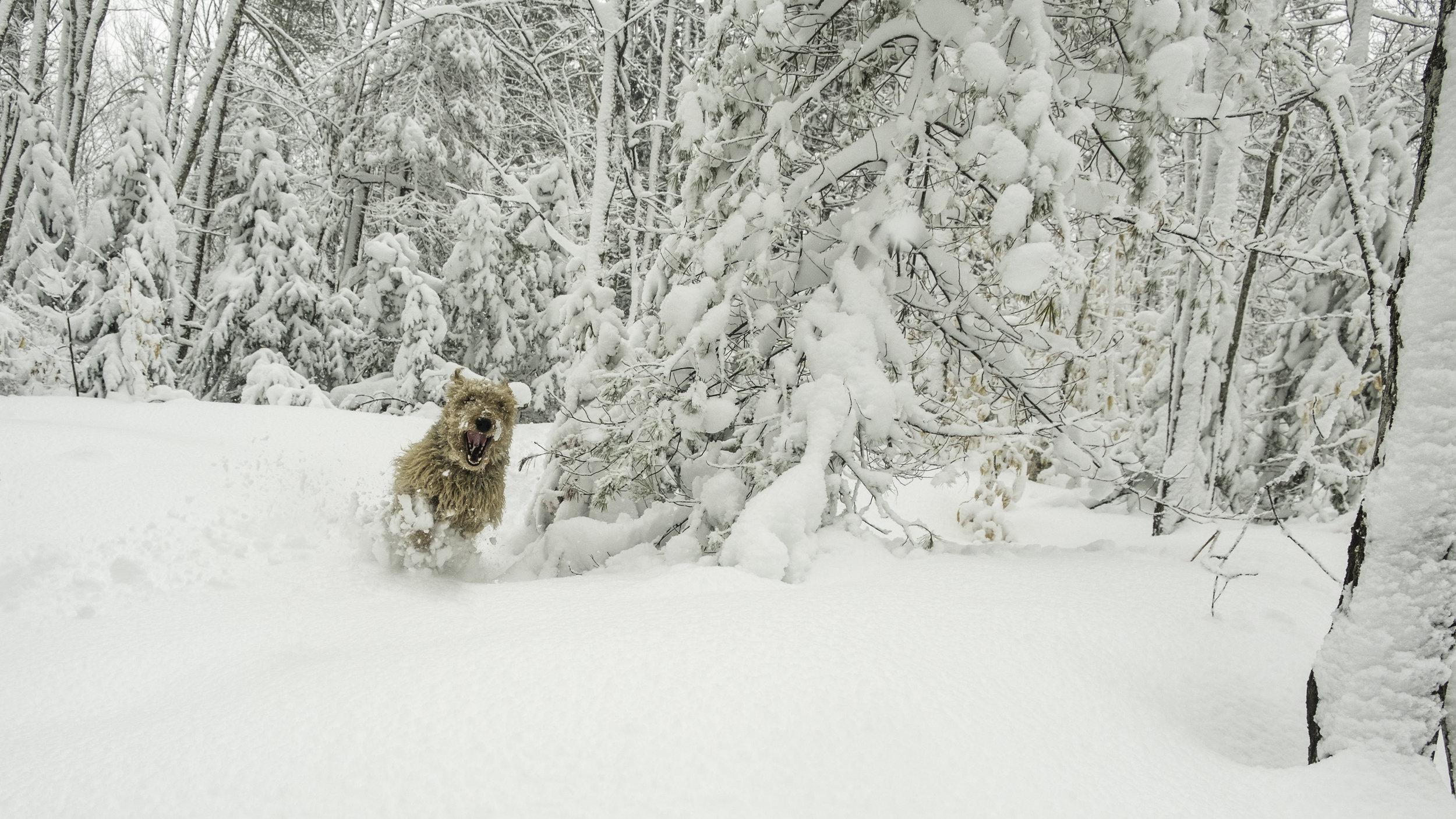 17_20180308_untitled_SnowStormBackyard_DSCF4417.jpg
