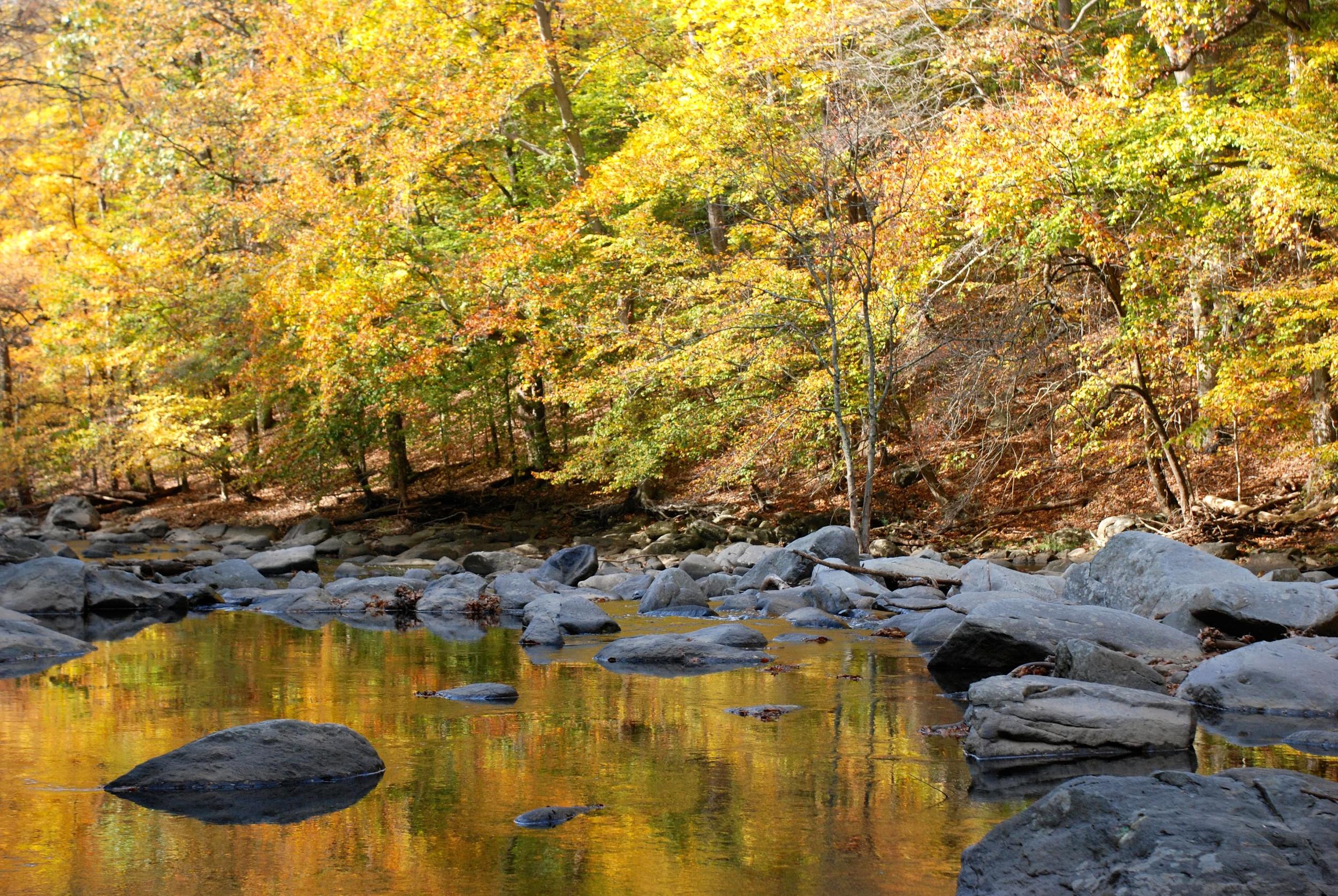 Rock creek fall colours.JPG