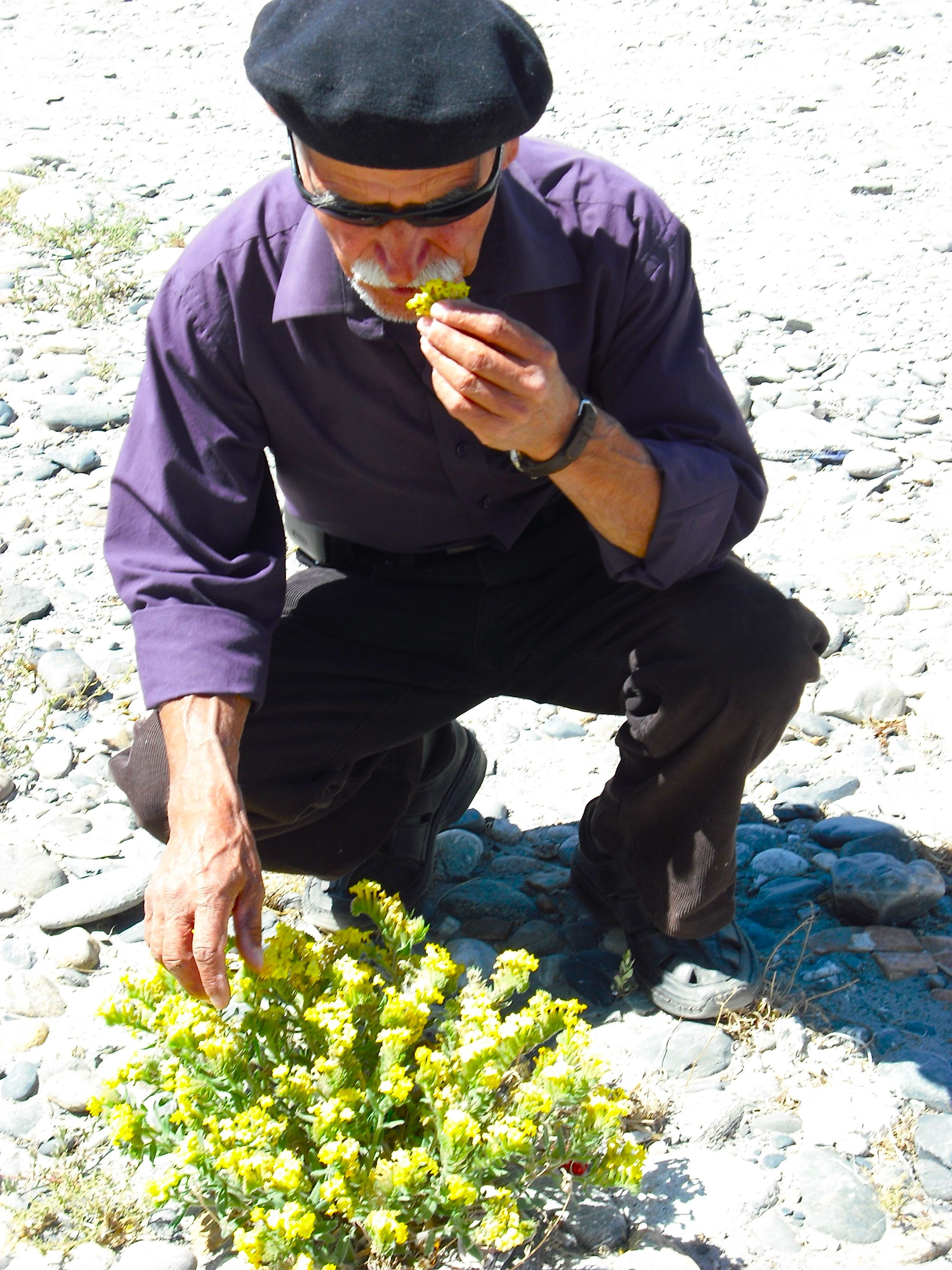 Dr. Shirinbek examines wild herbs he finds growing on the side of the road