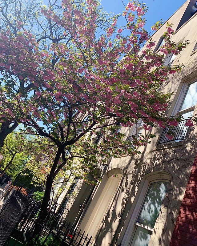 Summer in the City 🌸🌳 #alexandraphilip #newyorkcity
