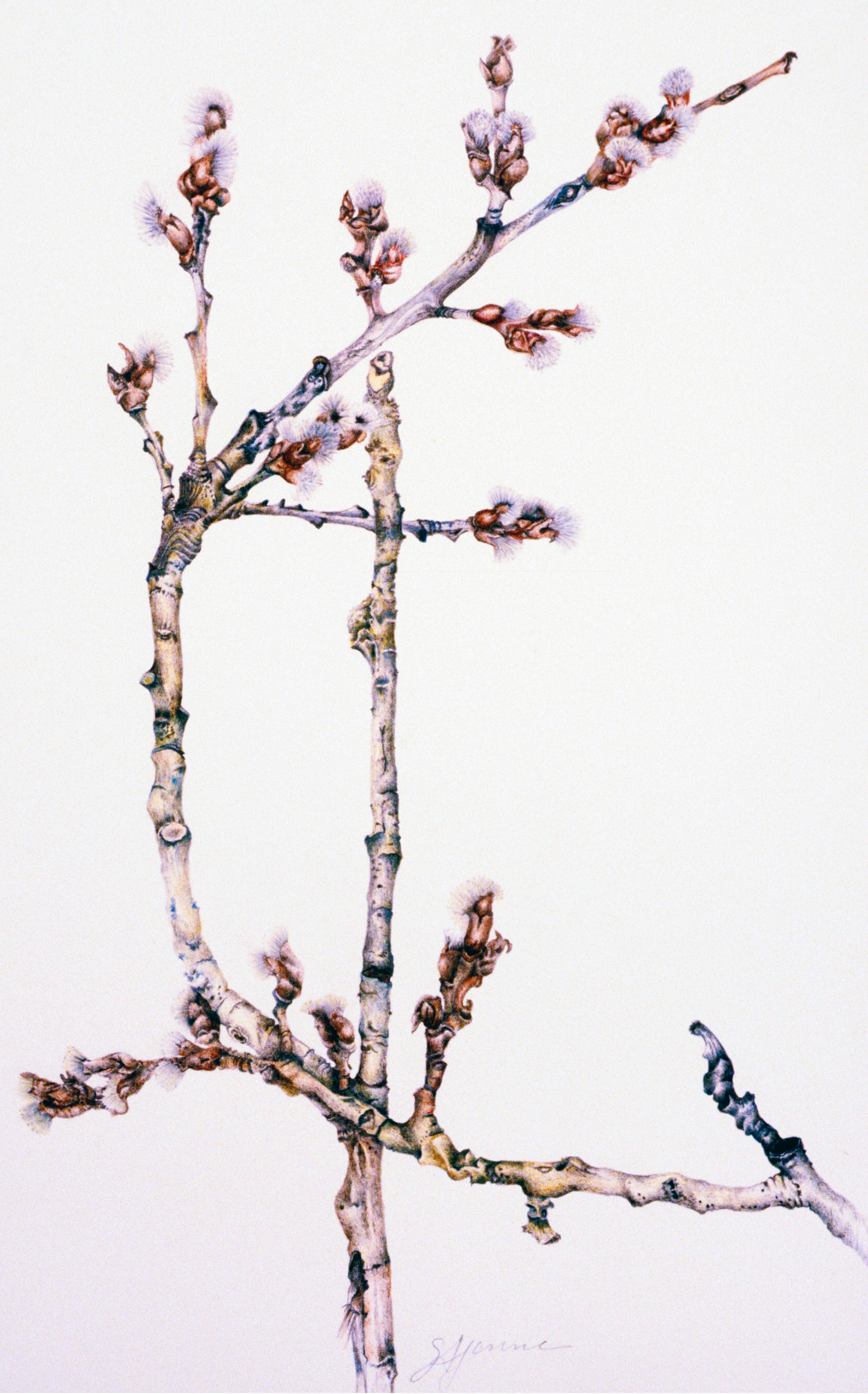 birch branches 8x10.png