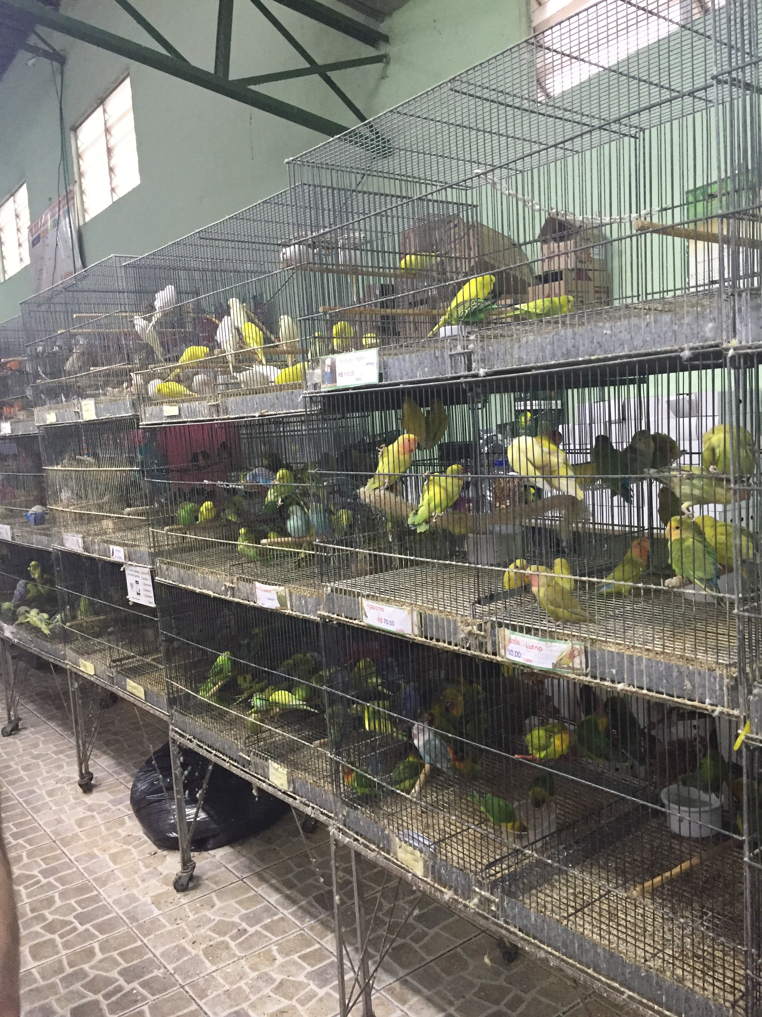 Birds for sale in Aquario Itaquera's Pet Shop in Sao Paulo, Brazil | Photograph by Talita Bateman