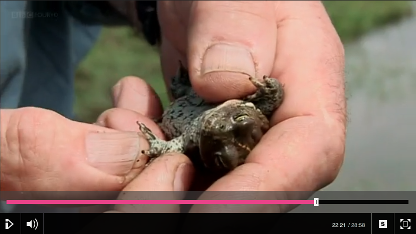 BBC Four - Born To Be Wild Series. Reptiles and amphibians episode.