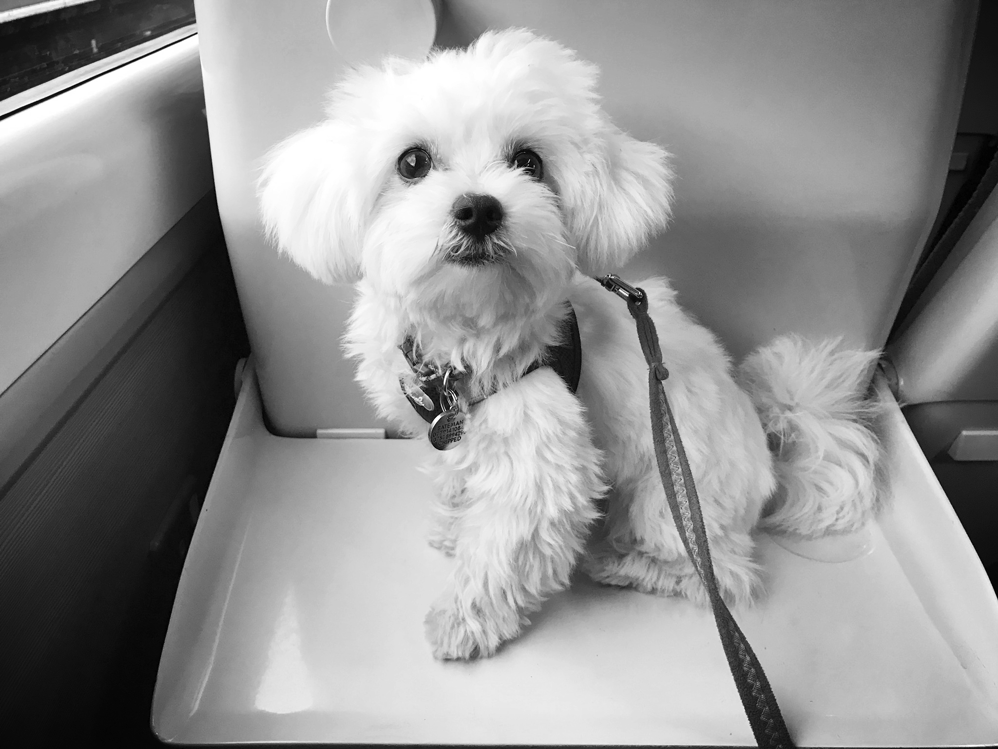 Casper on the train | Credit: Talita Bateman