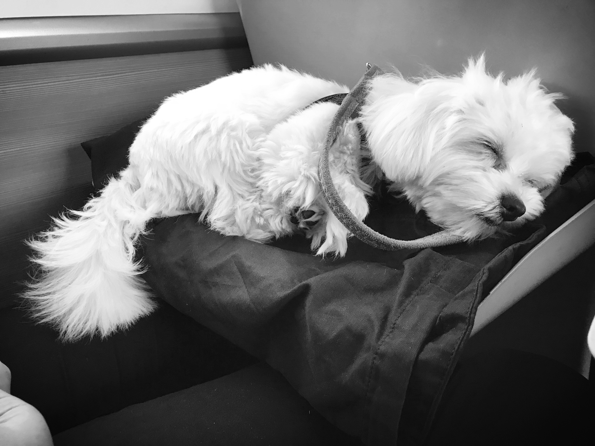Casper on the train | Credit: Alex Bateman