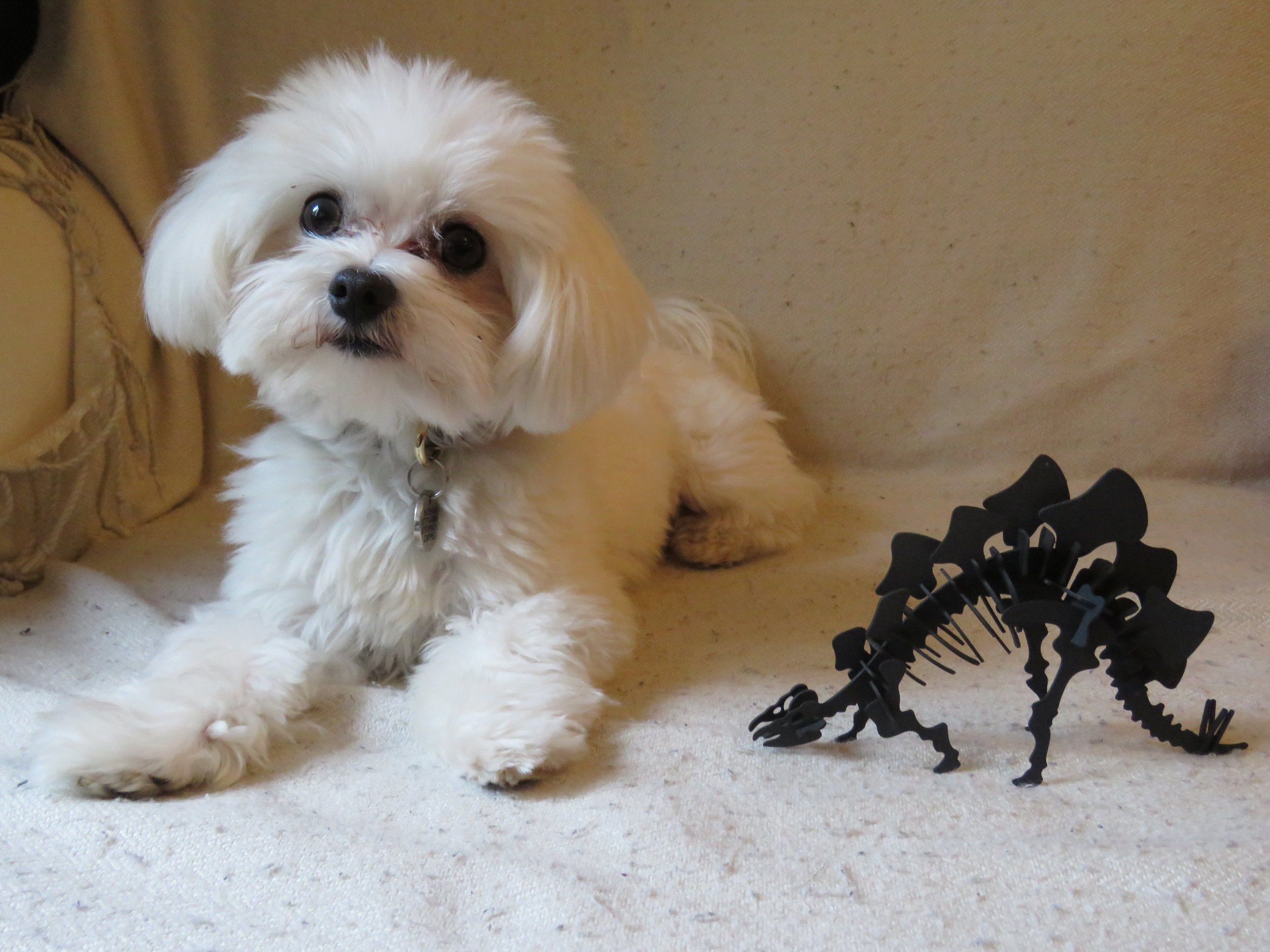 Casper and the stegosaurus | Credit: Talita Bateman
