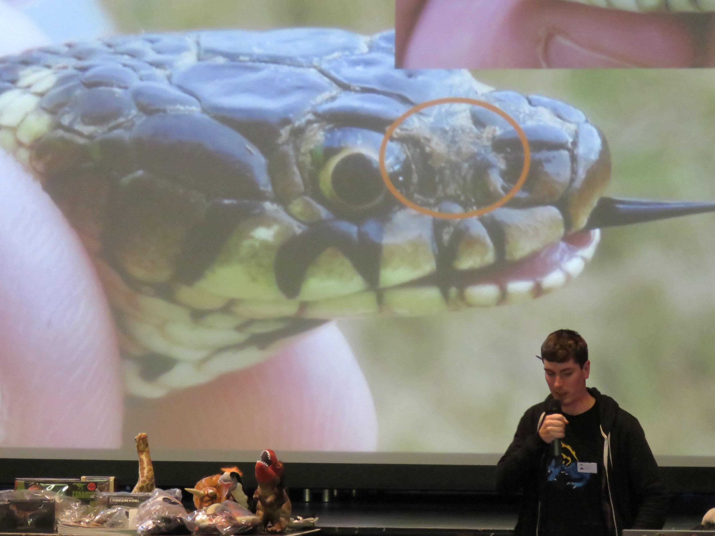 Steve Allain's presentation on 'Snake Fungal Disease: Potential Threats to European Snakes' | Credit: Alex Bateman