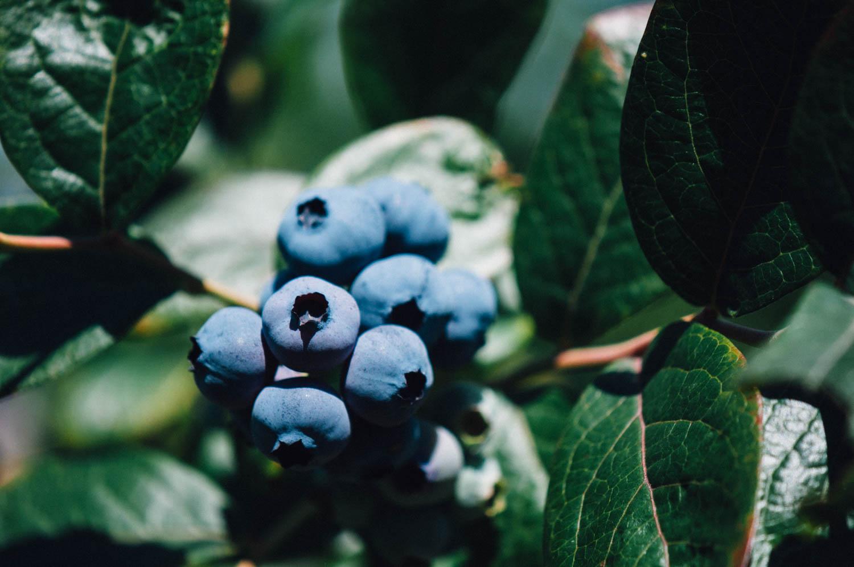 El Malaín | Berries