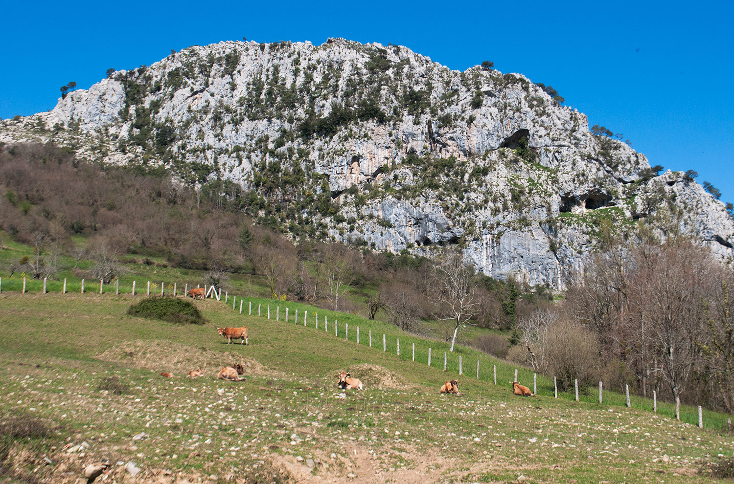 The best blue cheese in the world, Cabrales Cueva del Molín, is made in Asturias