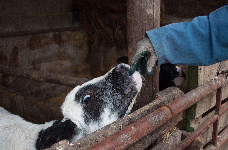 Cattle farmer, Asturias | Monica R. Goya