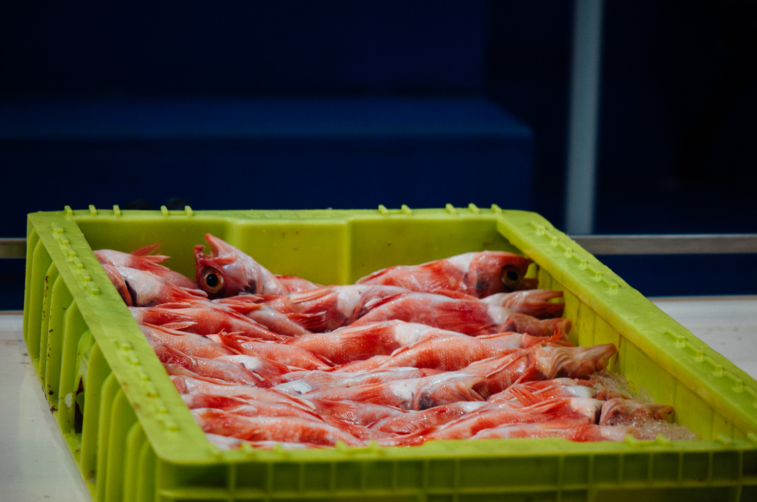 Early mornings at Asturias largest fish market