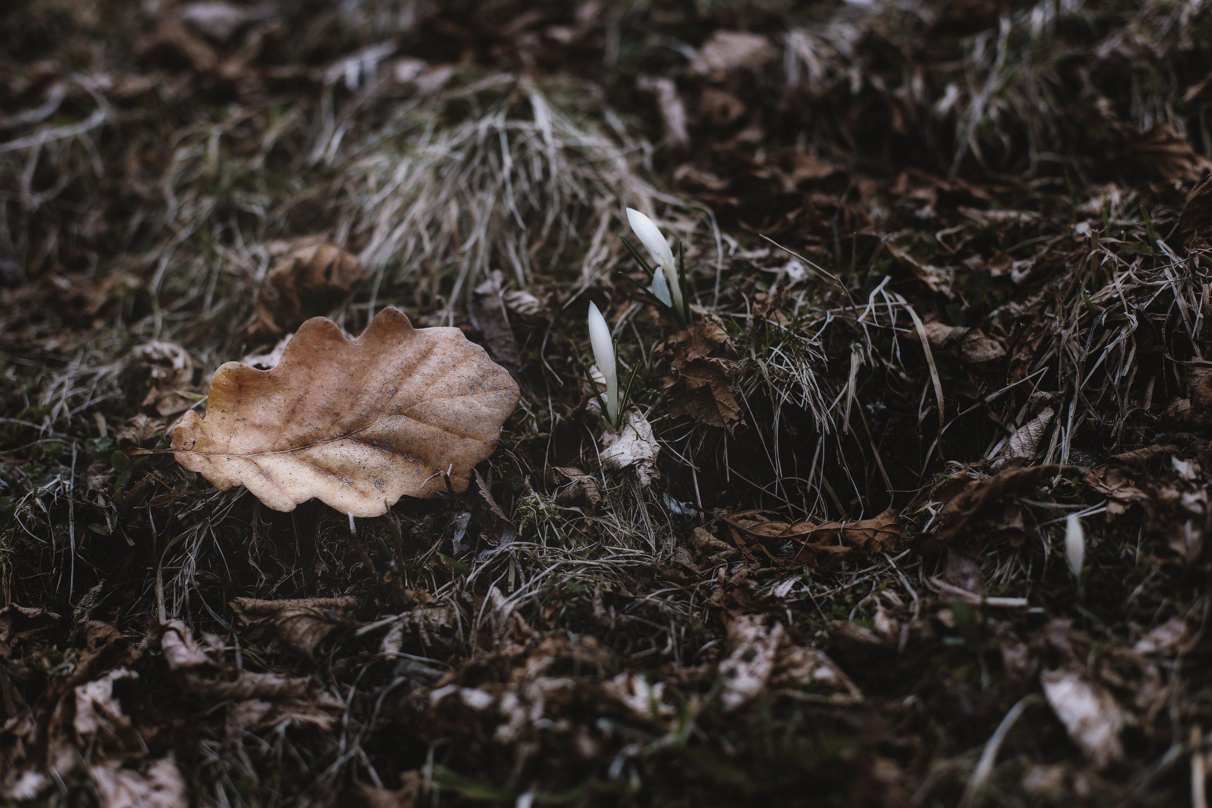 close-up-dirt-dried-leaf-1000078.jpg