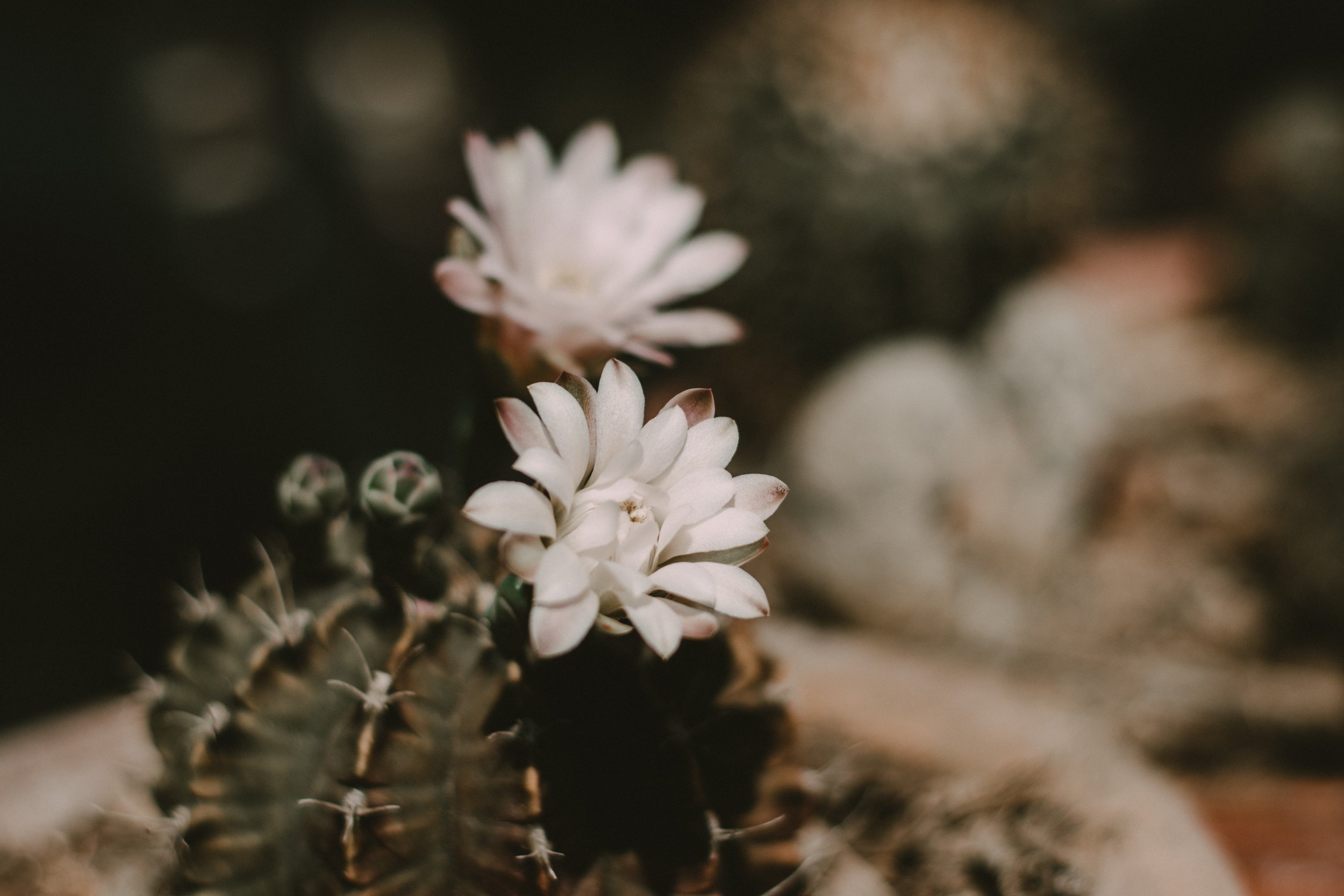 beautiful-beautiful-flowers-blooming-1242558.jpg