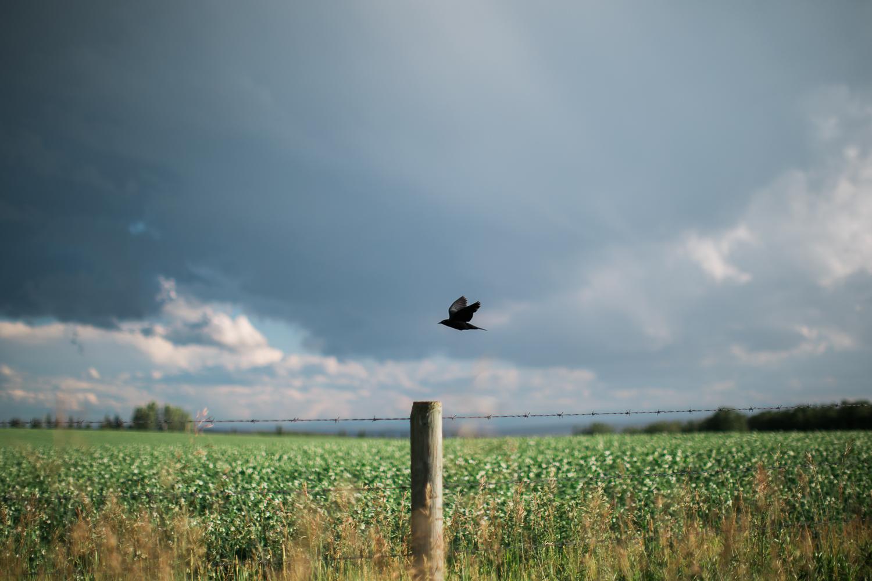 June_Storm06.jpg