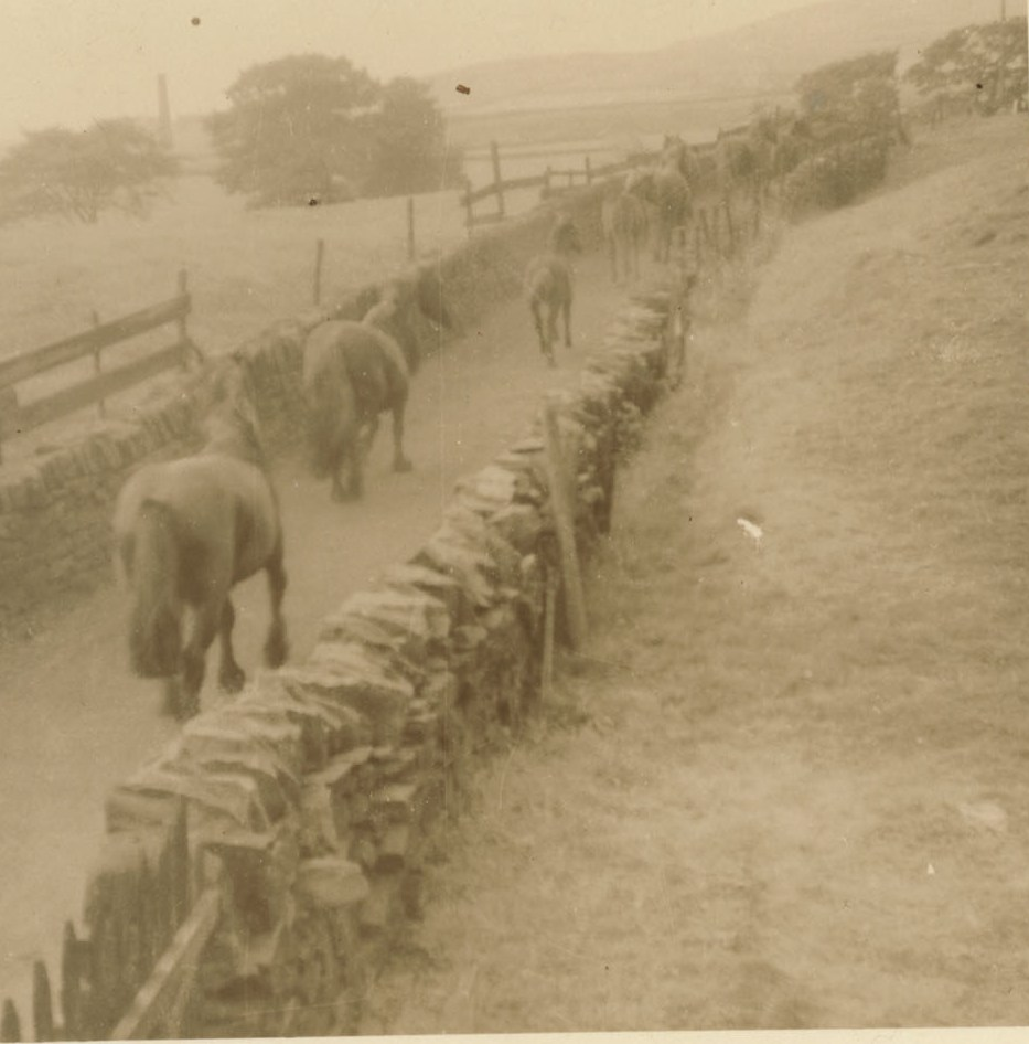 Gathering the Hades Hill Ponies 1961