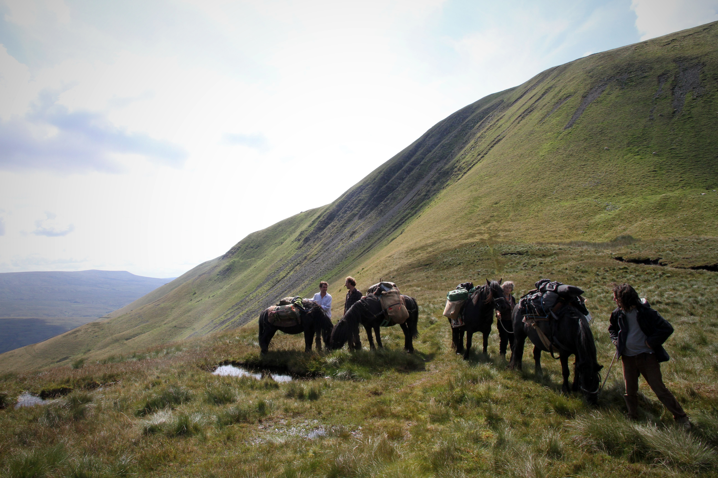 Pack Pony train. Photo taken on Yarlside, Ravenstonedale Common, Howgill Fells 2011. Hades Hill Baby Boo, Abs (unregistered), Hades Hill Pat ll, Hades Hill Patience