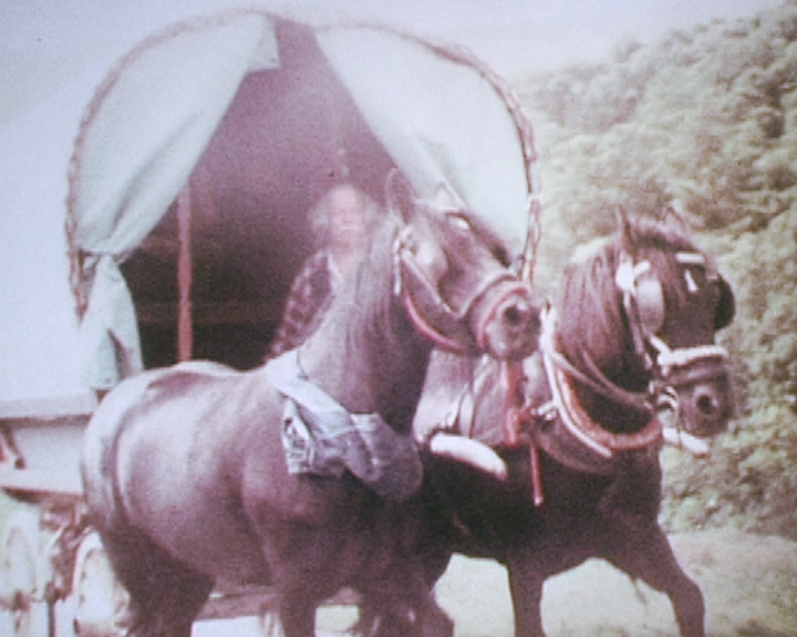 Heltondale Polly Perkins Xll (Sideliner) and Hades Hill Oscar (Shafts) en the road to Appleby Fair circa 1998