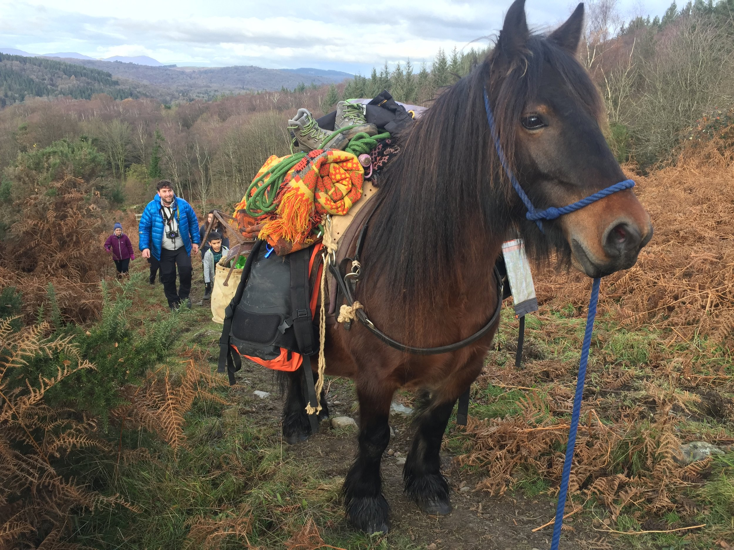 Fell pony adventure Pansy.JPG