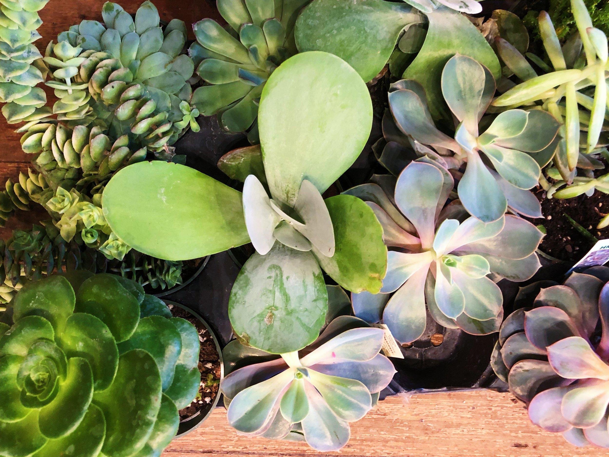 A-new-leaf-chicago-05.jpg