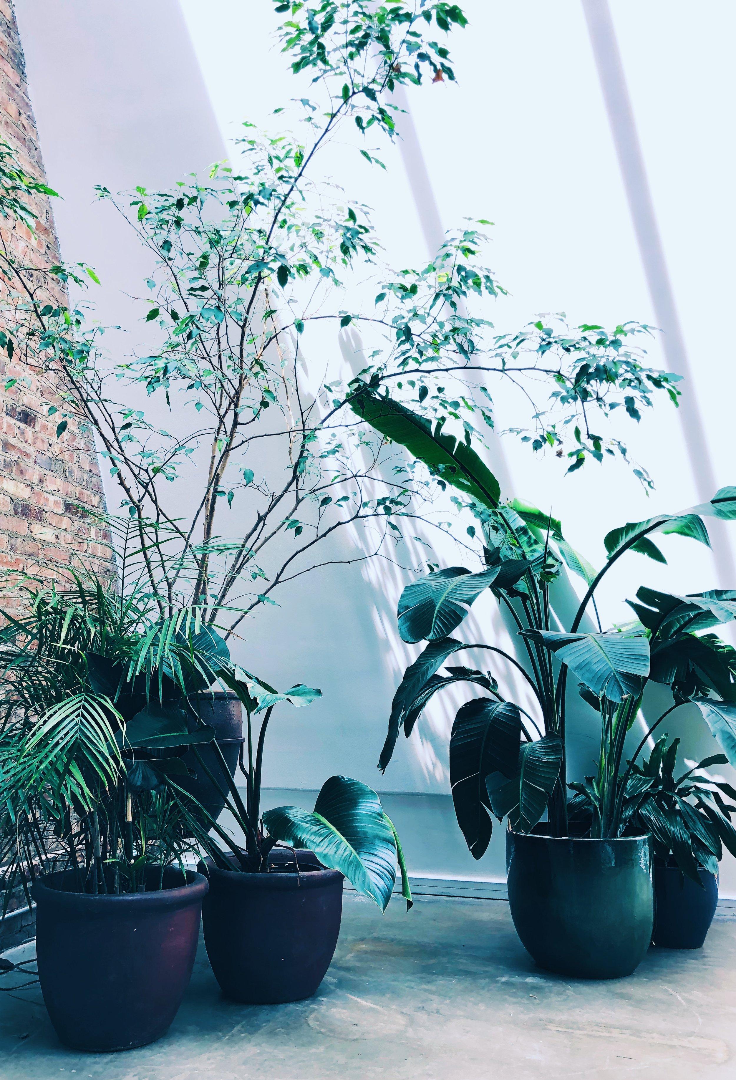 A-new-leaf-chicago-09.jpg