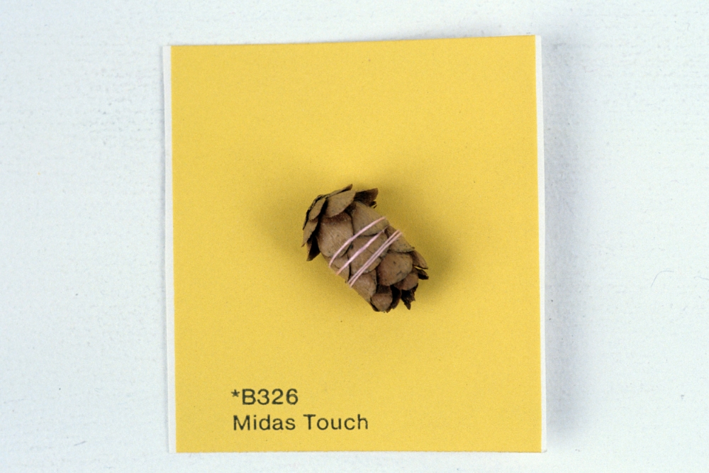 KS93_Midas Touch_pine cone sewn on paint chip_2x2.jpg