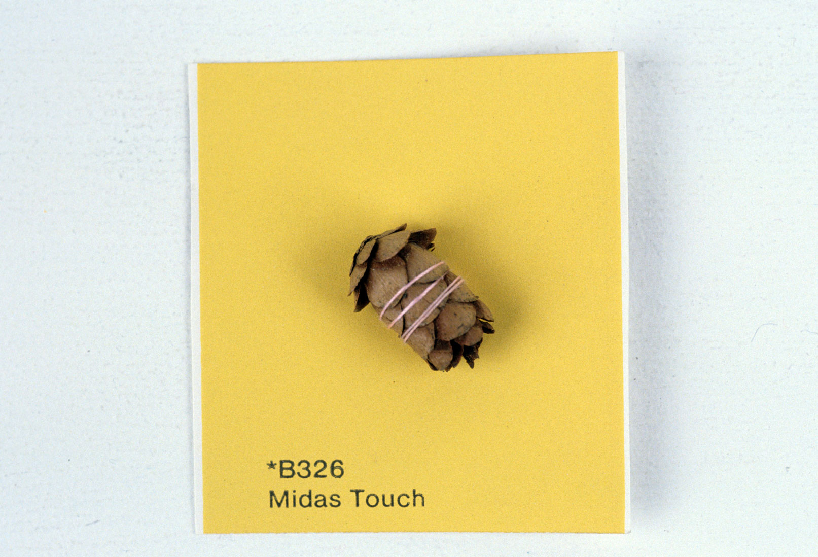 KS93_Midas-Touch_pine-cone-sewn-on-paint-chip_2x2_web.jpg