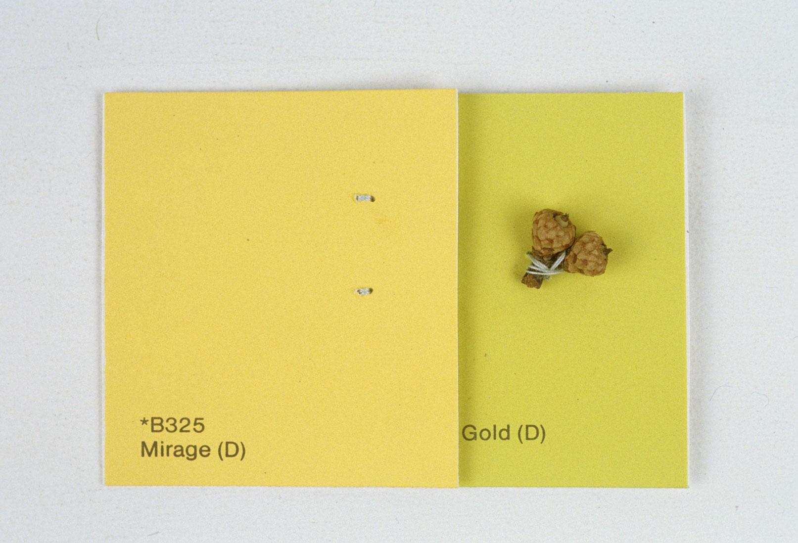 KS93_Mirage_baby-acorns-sewn-on-paint-chips_2x4_web.jpg
