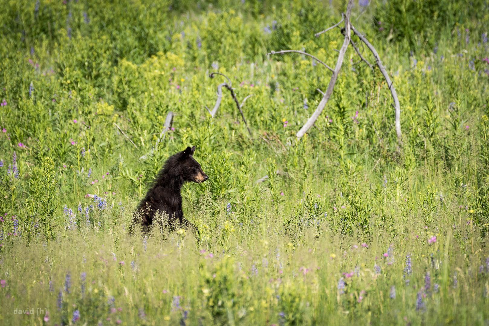 2017-06-25_Yellowstone_0057.jpg