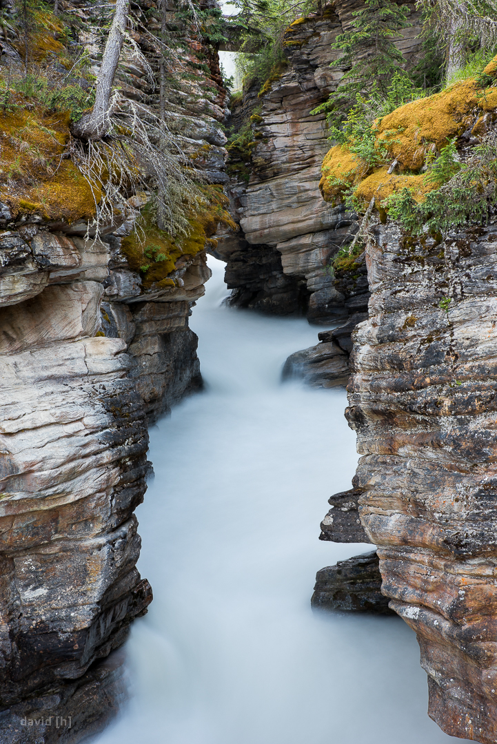 The gorge just below the Athabasca Falls is loud, wild and beautiful (and mosquito infested).