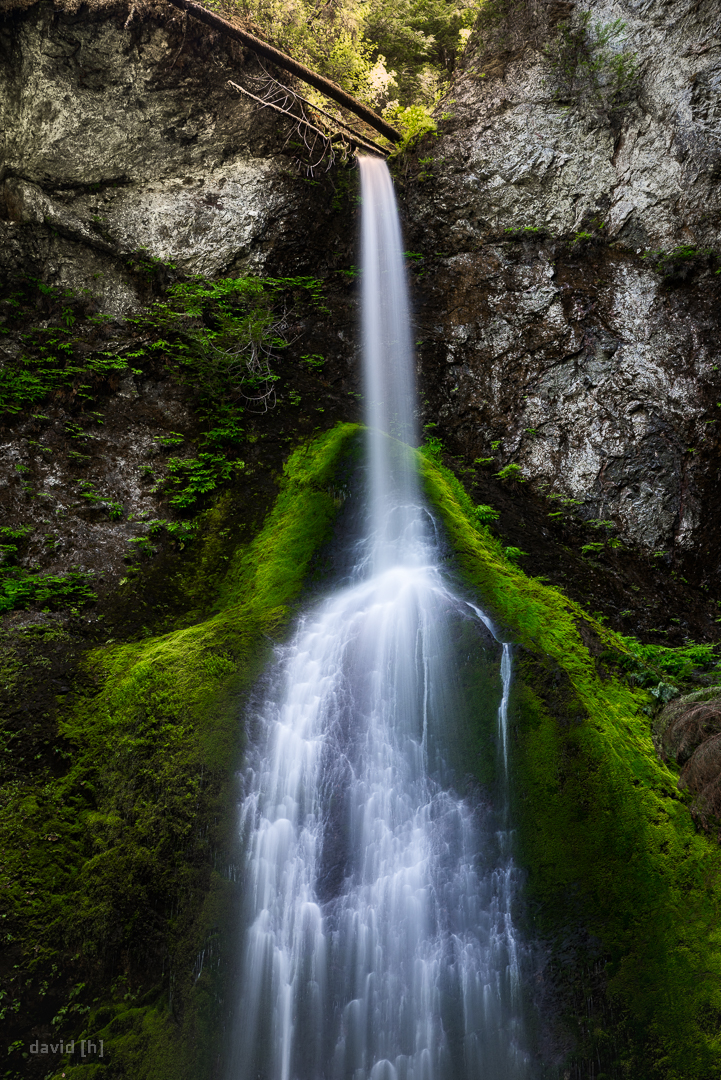 Marymere Falls sport some wild green moss next to the tumbling waterfall.
