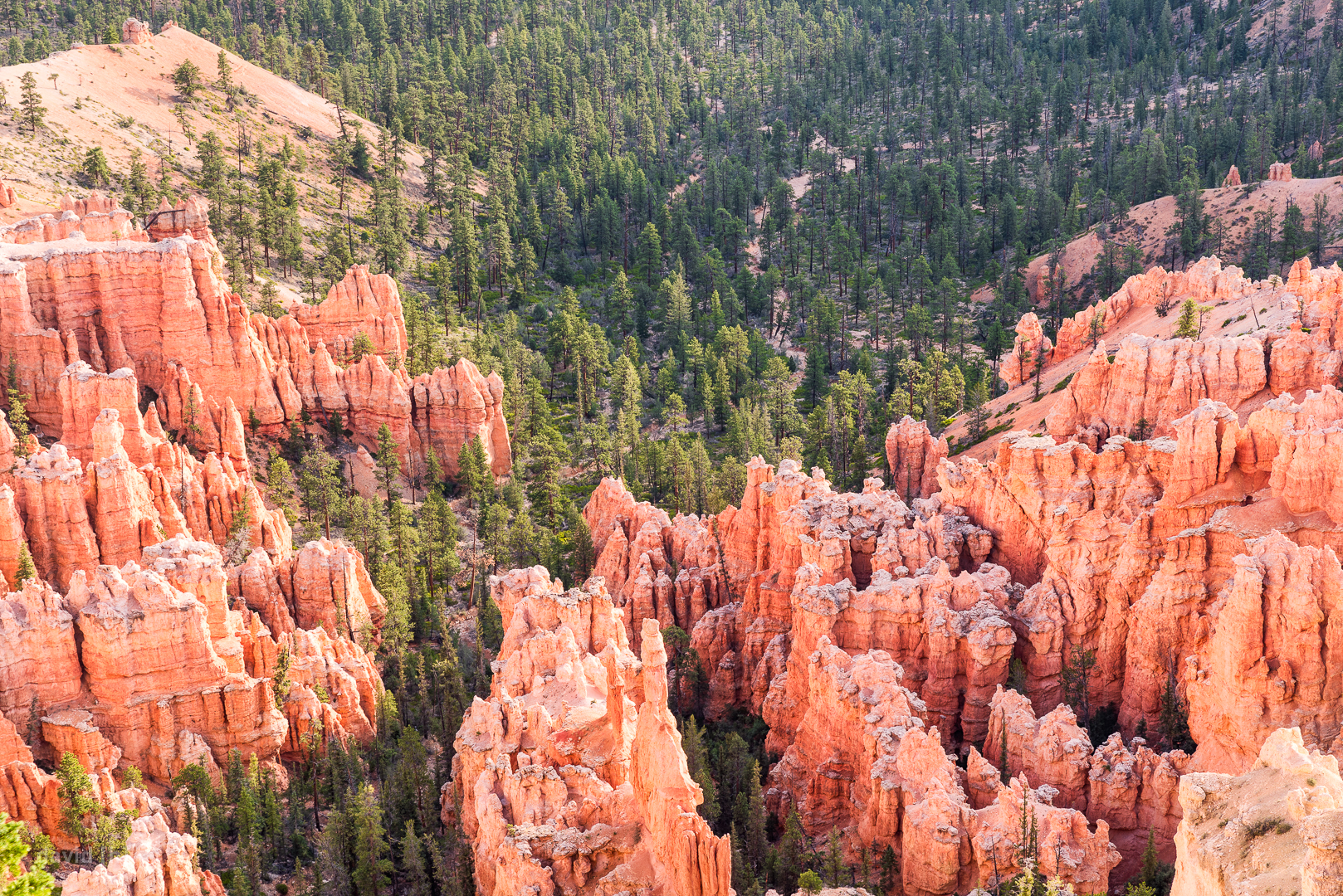 Ridges of hoodoos lead into a forested valley in Bryce Canyon.