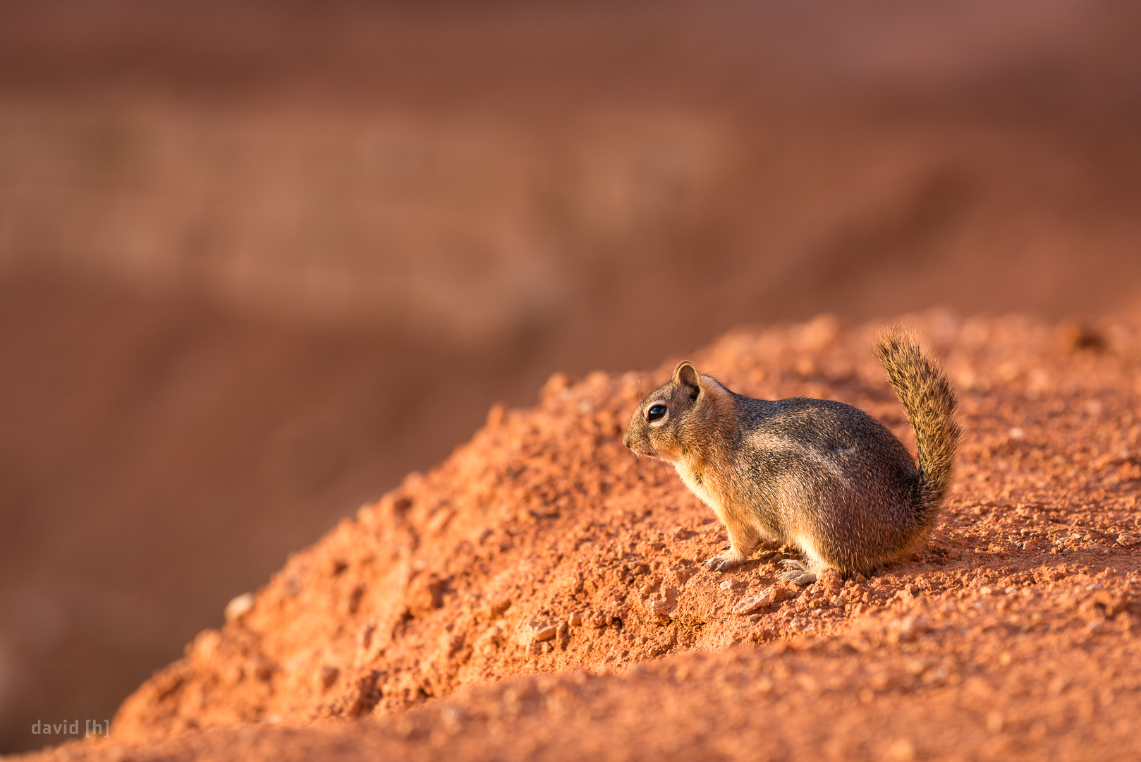I was not the only one enjoying the sunrise that morning in Bryce Canyon - the local wildlife sure appreciates those moments of silence and beauty as well.