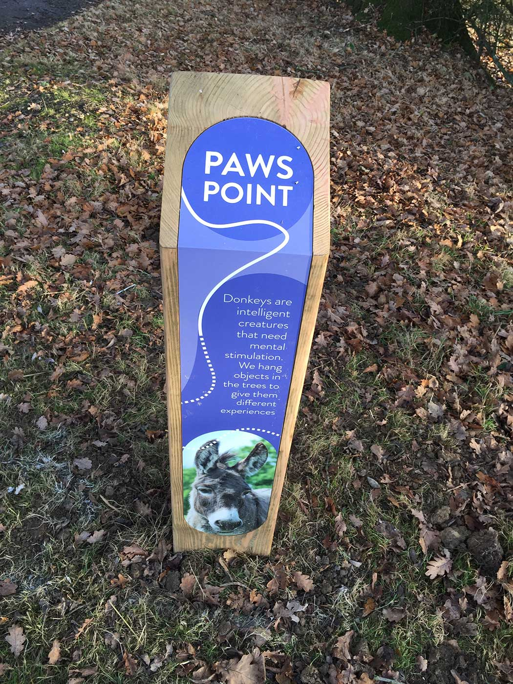 paws-point-3.jpg