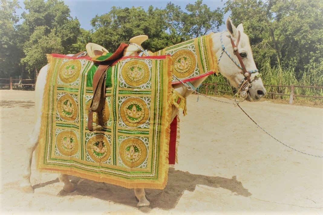 new indian garment for horse.jpg