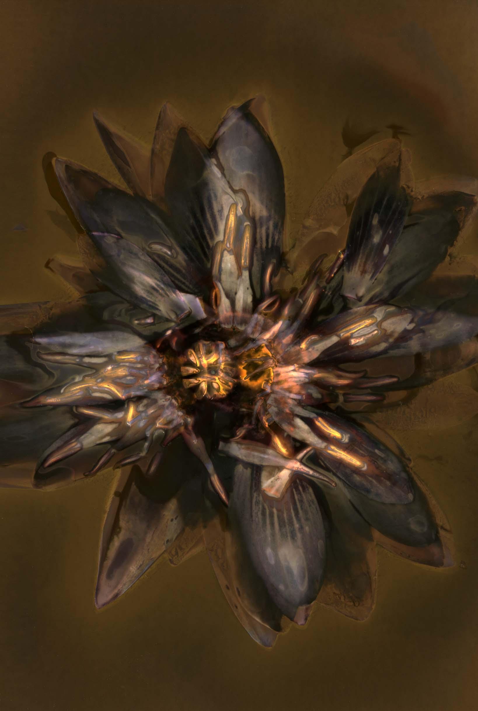 Final Print- Lilly Flower.jpg