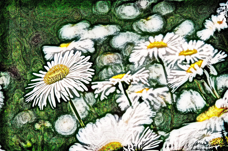 Daisies-15.jpg