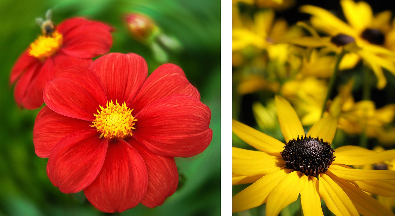 Flowers-Red_Yellow-15.jpg