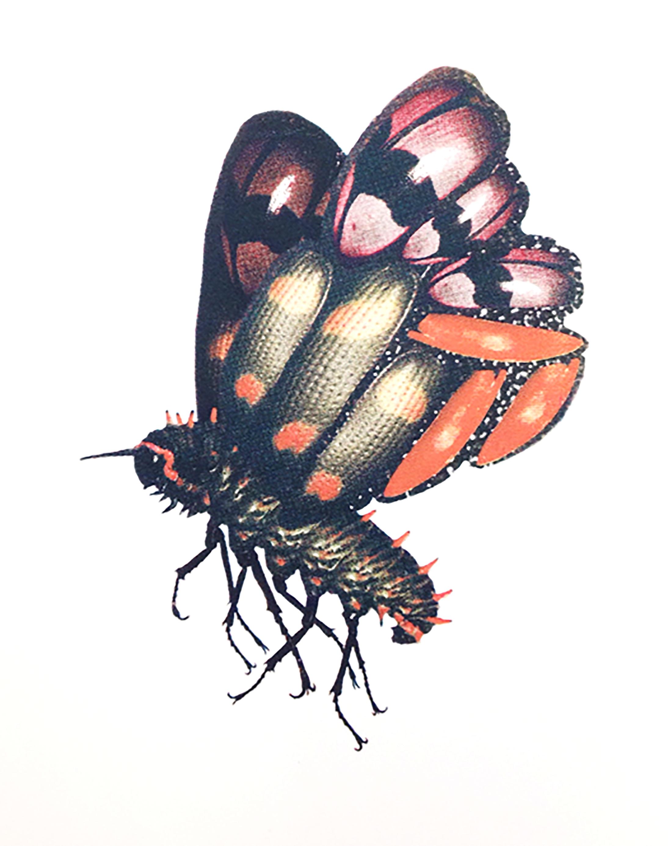 malignant moth.jpg