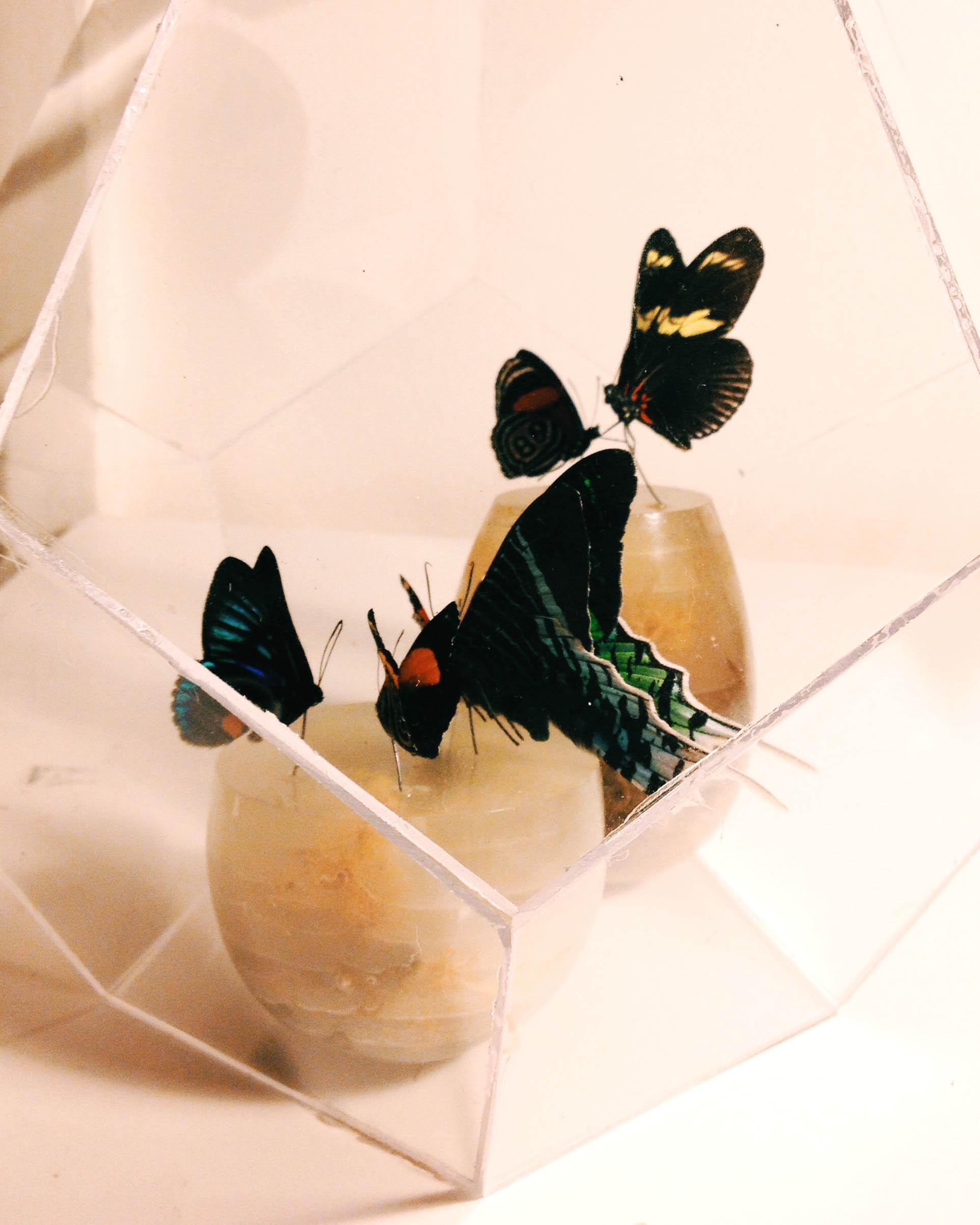 butterfly globe.jpg