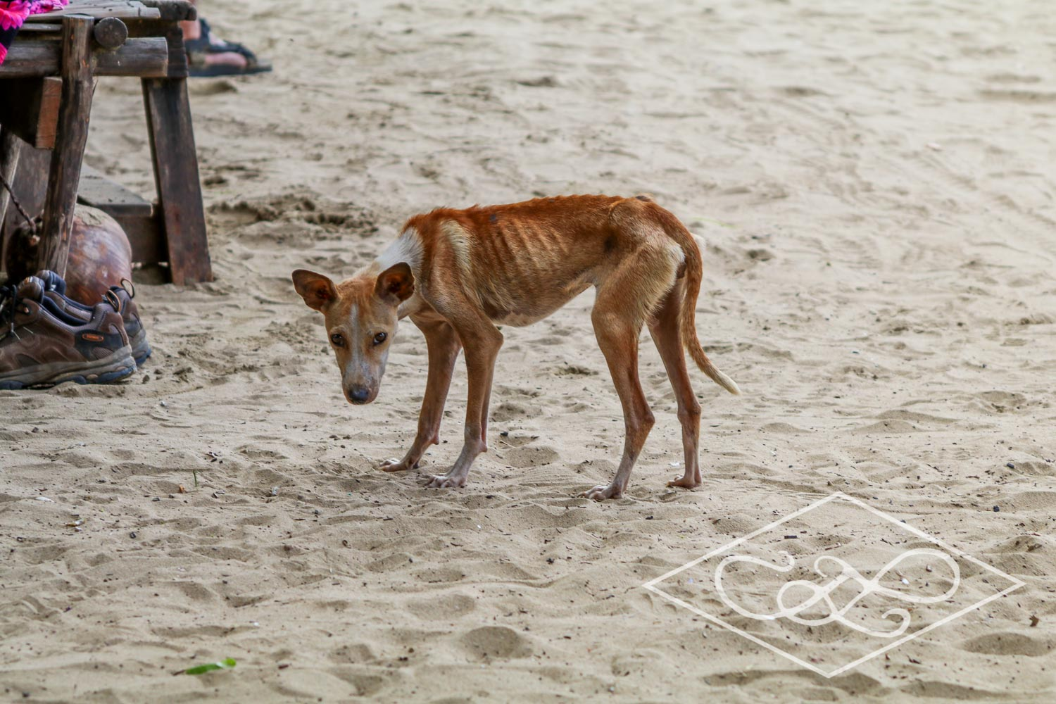 Starving stray