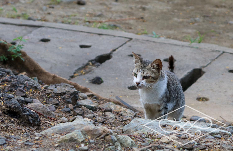Prowling Street Kitty
