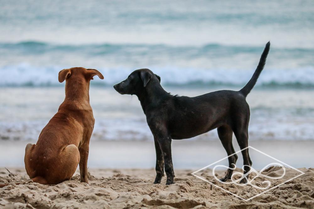 1.11.17 El Nido-Nacpen Beach-163.jpg