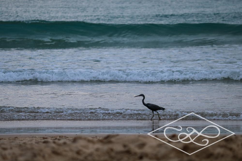 1.11.17 El Nido-Nacpen Beach-121.jpg