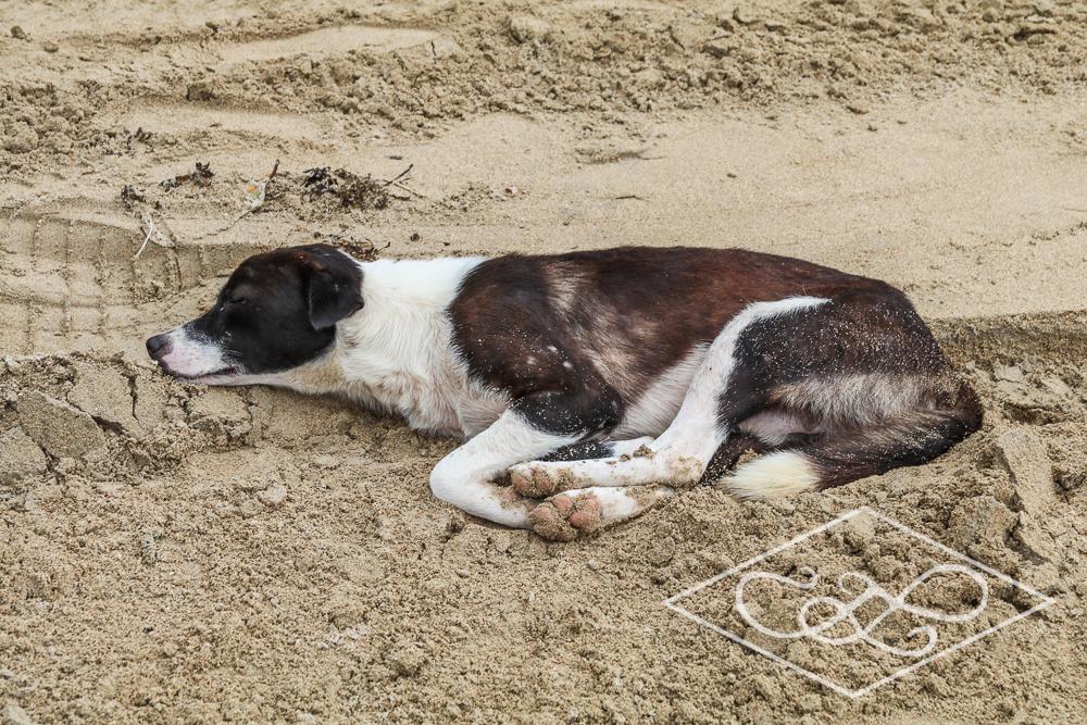 1.11.17 El Nido-Nacpen Beach-44.jpg