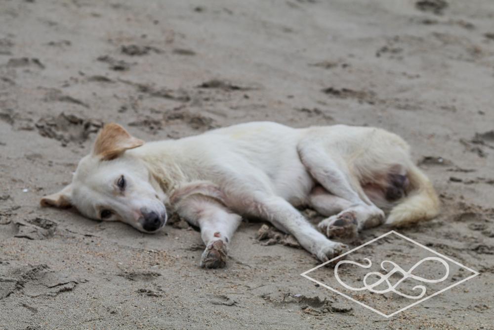 1.11.17 El Nido-Nacpen Beach-32.jpg