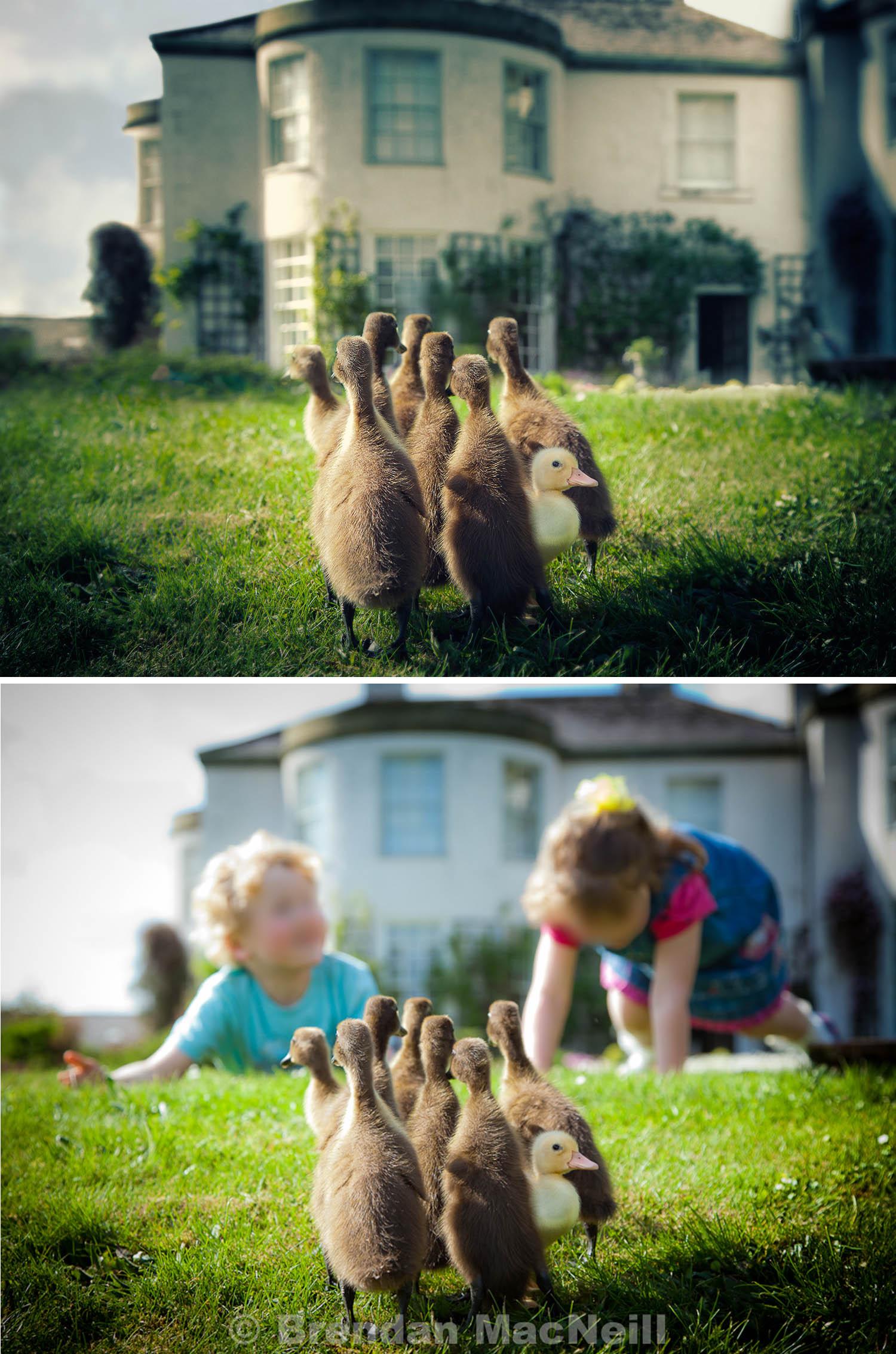 MacNeill_Runner_ducks.jpg