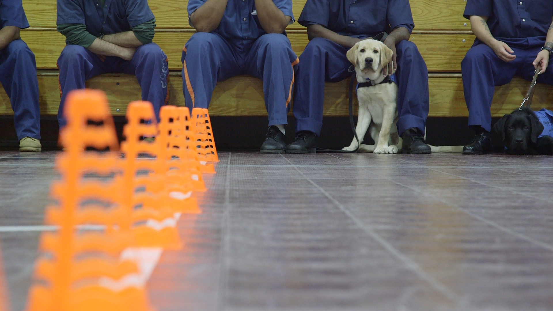 - Our primary audience include: Labrador fans & owners, guide dog trainers & owners*, vets, doggy day care workers, groomers, and anyone interested in learning more about dogs' psychology and well-being.*Through audio description, we'll create a version for partially sighted people.