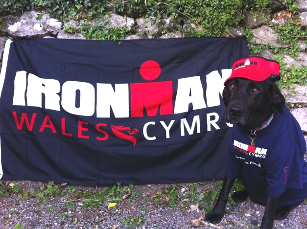 Ironman Wales Dog and Flag, Tenby